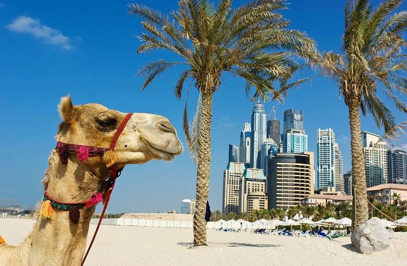 Трудоустройство в Арабских Эмиратах